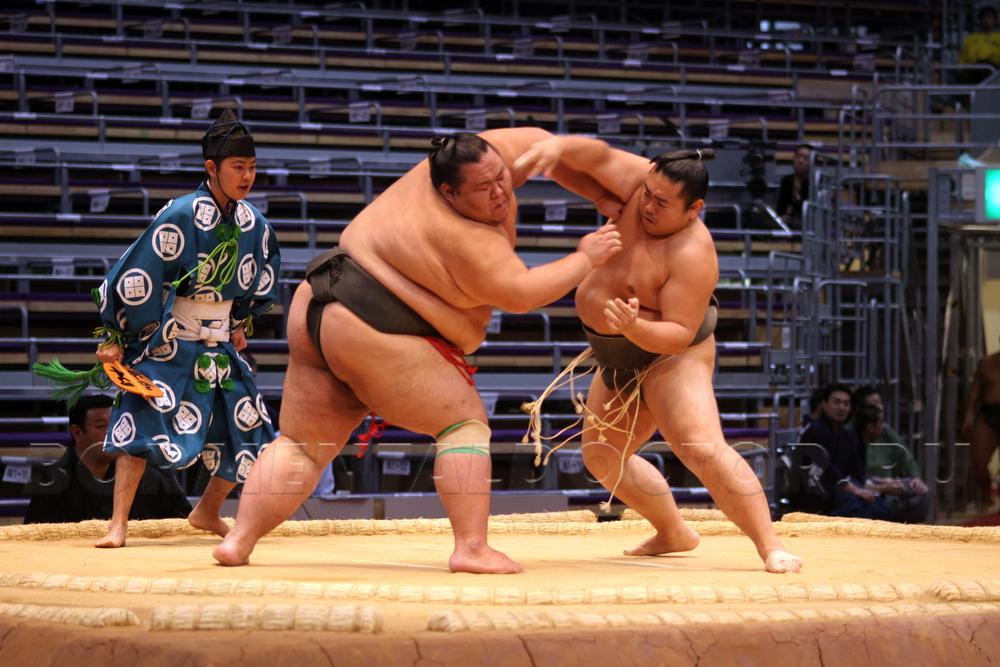 «Толстые», но спортивные – жизнь борцов сумо