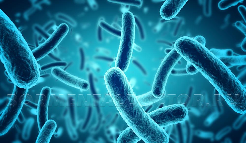 При определенных видах бактерий лишний вес появляется даже при диетах и активном образе жизни