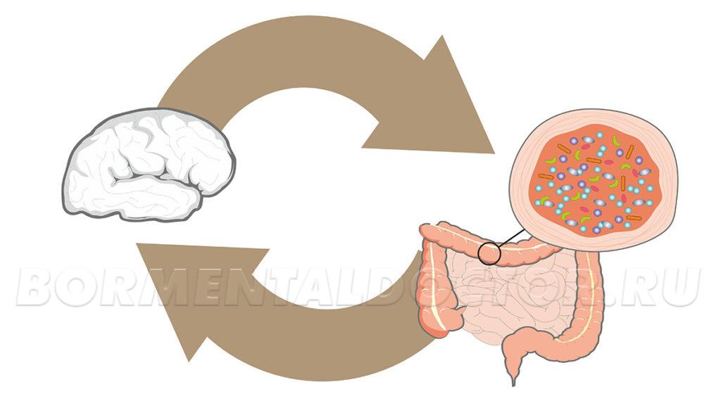 Роль микробиомов в ожирении